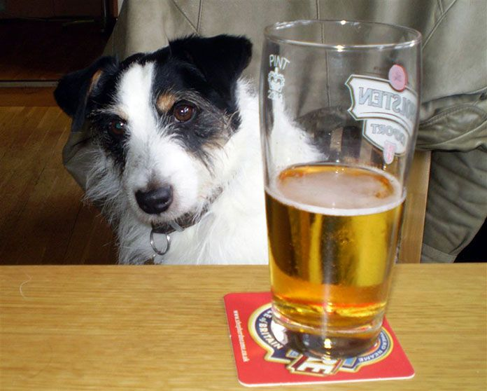Can Dogs Get Drunk? | Dog's Health