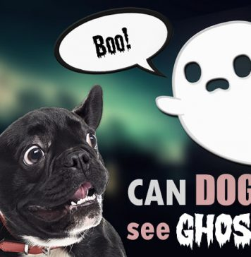 can dogs see ghosts
