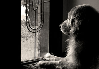 dog waiting