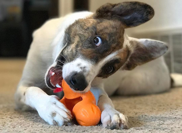 best chew toys for aggressive chewers