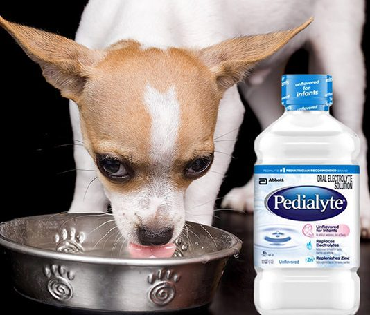 can dogs have pedialyte