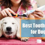 best dog toothpaste