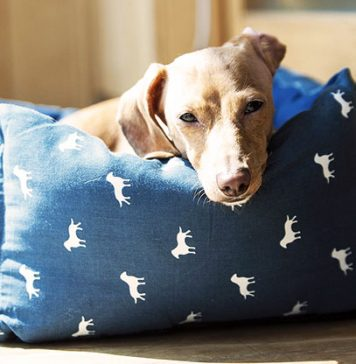 best washable dog beds