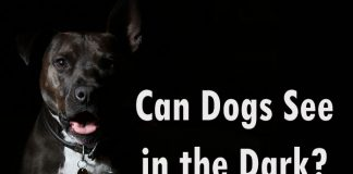 Can Dogs See in the Dark