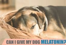 can I give my dog melatonin
