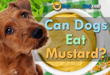 can dogs eat mustard