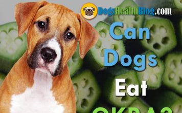 can dogs eat okra