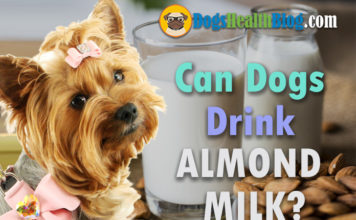 can dogs drink almond milk