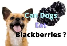 Can Dogs Eat Blackberries?
