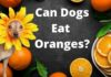 Can Dogs Eat Oranges