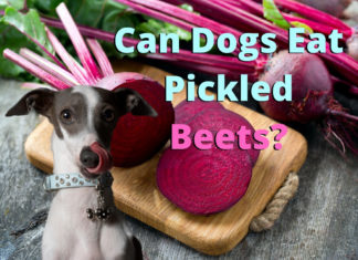 Can Dogs Eat Pickled Beets