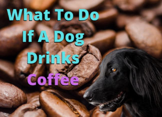 What To Do If A Dog Drinks Coffee